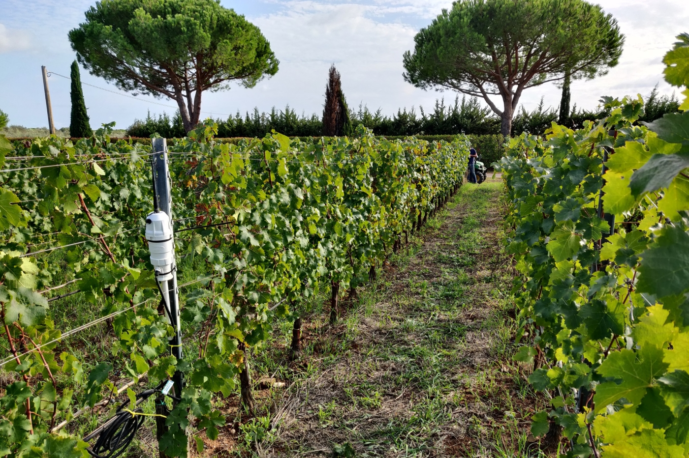 SmartCloudFarming – More efficiency in soil management