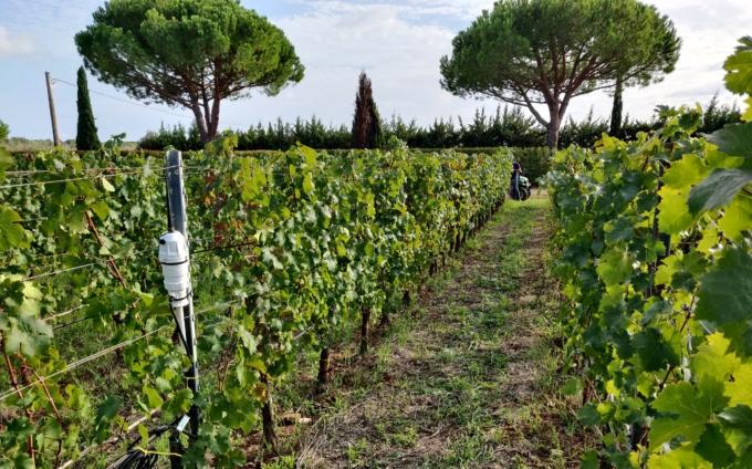 SmartCloudFarming – Mehr Effizienz im Bodenmanagement