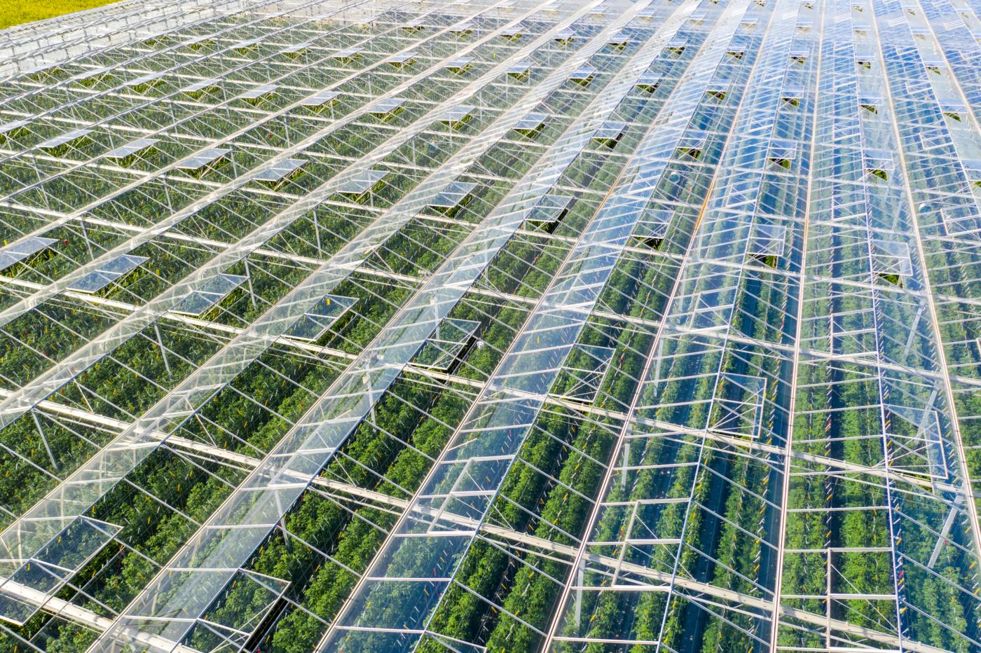 Hortiya – indoor farming with AI