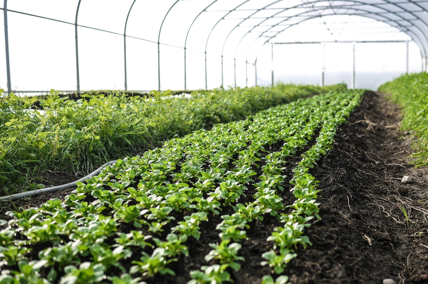 Tiny Farms – Ökologischer Anbau durch digitale Vernetzung